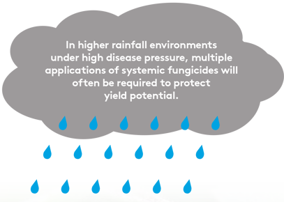 Your Guide to Applying Foliar Fungicides